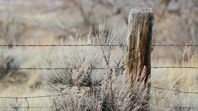 Wyoming beauty-32